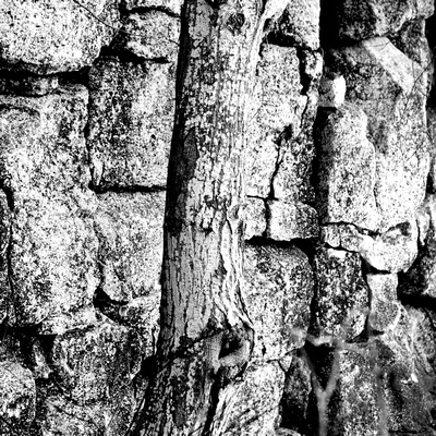Forest Texture 01