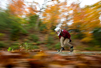 Autumn Longboard